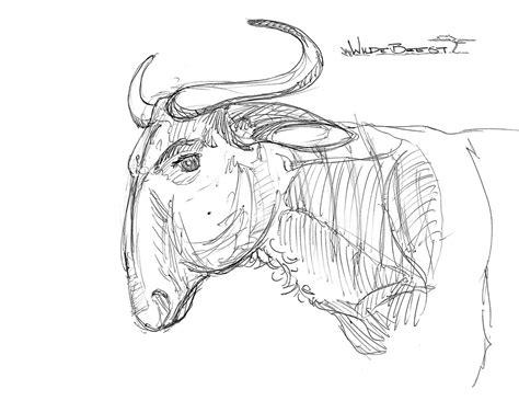 quick animal sketches ramblings