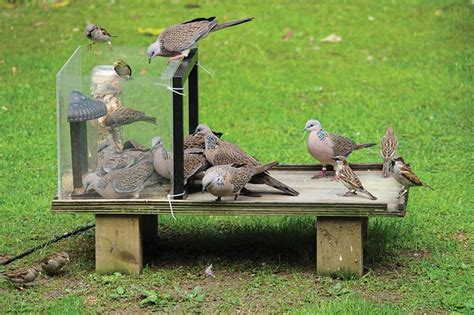 To Feed Or Not To Feed? The Impacts Of Backyard Bird
