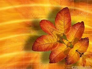 fond d39ecran feuille d39automne With forum plan de maison 13 fond decran feuilles dautomne