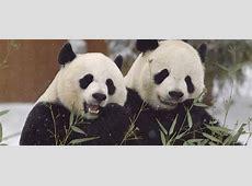 14 Best Python Pandas Features Dataconomy