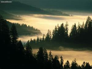 Nature: Landscapes Indian Creek Siuslaw National Forest ...