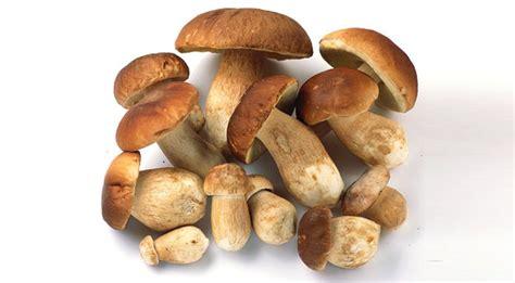 porcini mushrooms zen mushrooming the art of mushroom hunting finedininglovers com