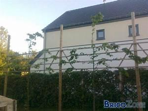 Haie Pas Cher Qui Pousse Vite : arbre charme prix haie qui pousse vite with arbre charme ~ Premium-room.com Idées de Décoration