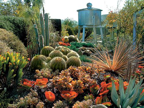 suculent garden succulent gardens ferrebeekeeper