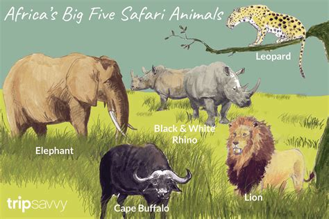 South African Animals Names