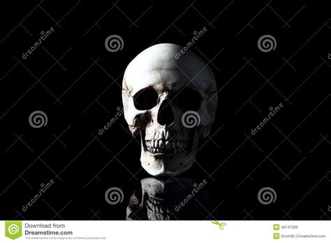 Realistic Model Of A Human Skull With Teeth Royalty-free