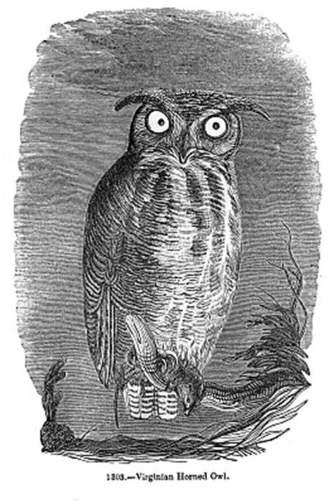 vintage halloween clip art spooky owl  graphics fairy