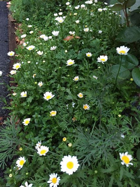 pin  salvador mancilla   garden plants garden