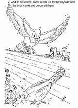 Parable Scripture Sower Vineyard sketch template