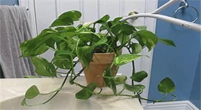 Irrigation Drip Garden Plant Movements Efficiently Works
