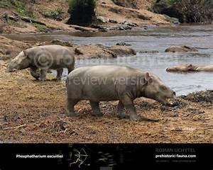 Phosphatherium escuillei  Phosphatherium