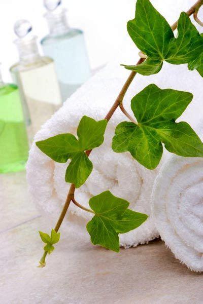 bio parfum selber machen rezept cellulite 246 l selber machen efeu 214 lauszug