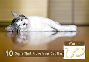 symptoms of worms in cats what do roundworms look like in cats breeds picture