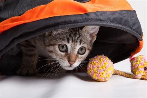 spiele fuer katzen die fuer spass und bewegung sorgen