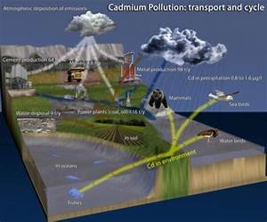Cadmium Pollution U2014transport And Cycle  Adapted Accord