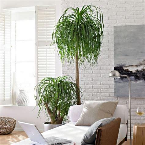 Wohnzimmer Pflanze Groß by Pflanzen Ideen Wohnzimmer