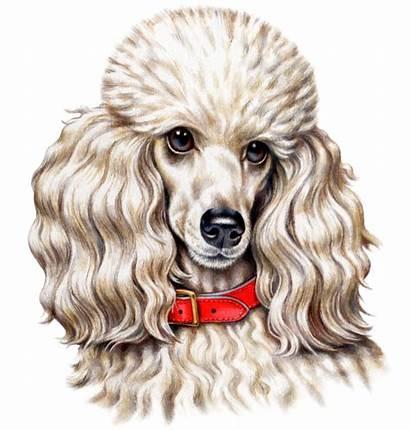 Poodle Fabric Dog Custom Quilt