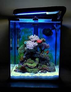 Idee Decoration Aquarium : d cor aquarium l gant pour que vos poissons soient heureux ~ Melissatoandfro.com Idées de Décoration