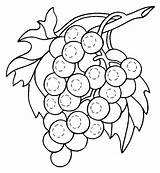 Grapes Coloring Pages Raisin Fruit Fruits Rodrigues Laura Vines Stroke sketch template