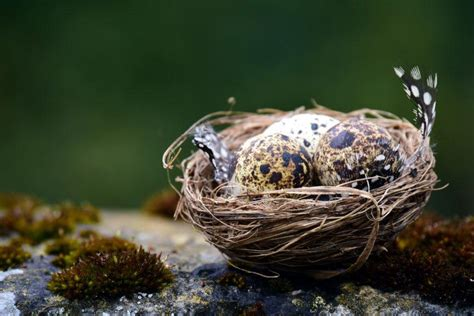 Offenders who destroy bird nests 'could face longer jail time' - STV News