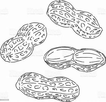 Amendoim Desenho Peanuts Drawing Vectors Vetor Alergia