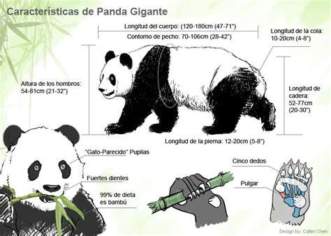 Características de panda gigante - viaje-a-china.com
