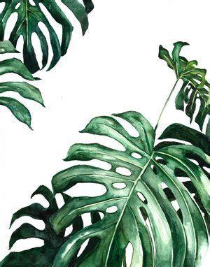 monstera plant watercolor ampersandmothercom