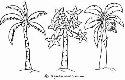 Pohon Gambar Kelapa Mewarnai Kartun Untuk Contoh
