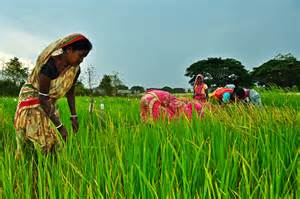 Agriculture and Farming India