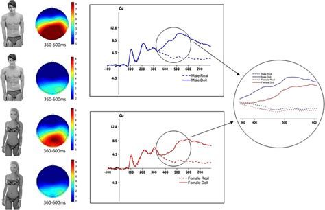 Stimuli and electrophysiological results of Experiment 1. Left panel:...   Download Scientific ...