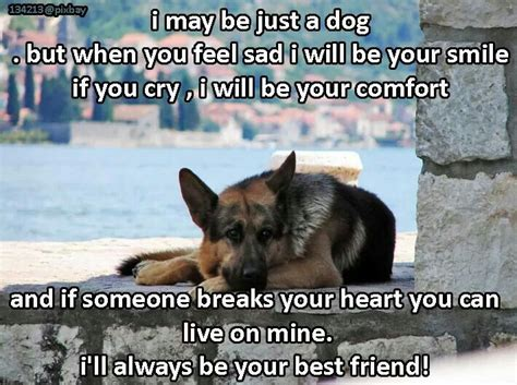 german shepherd quotes sayings signsect