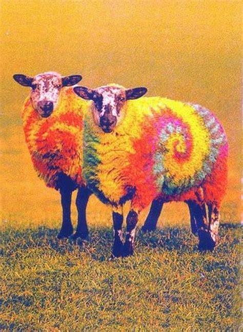 kijiji kitchener waterloo furniture colored sheep 28 images gray malin frames a flock of
