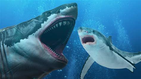 römer i size 191 evolucion 243 el megalod 243 n en el gran tibur 243 n blanco