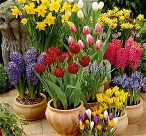 Blumenzwiebeln Pflanzen Frühjahr : blumenzwiebeln pflanzen mit hornbach ~ A.2002-acura-tl-radio.info Haus und Dekorationen