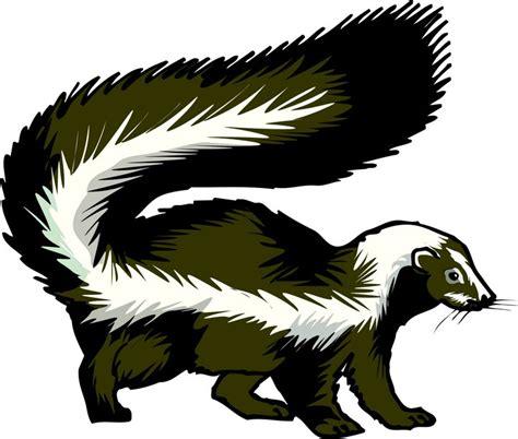Skunk Clipart Skunk Spraying Clipart Www Pixshark Images