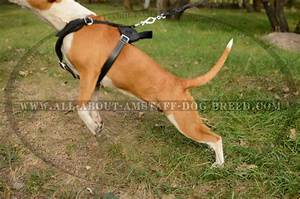 Buy Adjustable Leather Protection Training Amstaff Harness