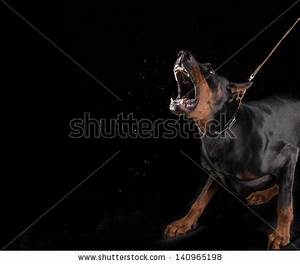 Mean Dog Stock Photo 140965198 : Shutterstock