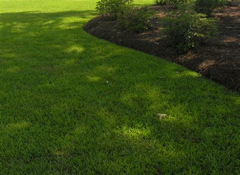 Lawn And Landscape Grass