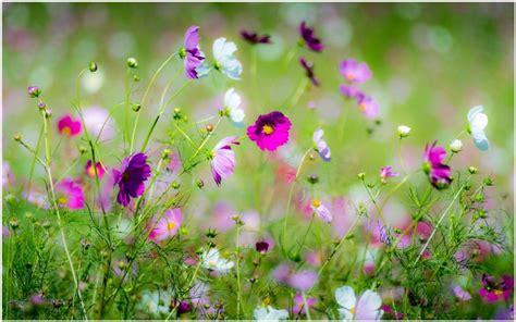 Beautiful Spring Flowers Hd Wallpaper  Beautiful Spring