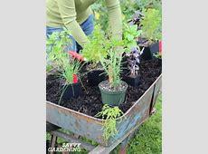 Best Herb Pots Excellent Sagaform Stoneware Herb Pot Trio