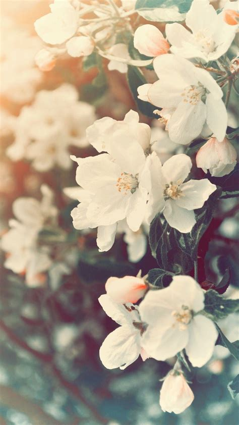 aesthetic spring flowers wallpapers hd background images