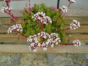 Plante Succulente Espèces Représentatives : photo petite plante succulente ~ Nature-et-papiers.com Idées de Décoration
