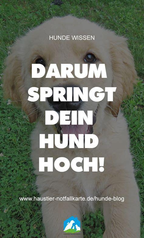 Glueckliche Haustiere Sauberkeit Und Erziehung by Hilfe Mein Hund Springt Hoch Hunde Hunde Verstehen