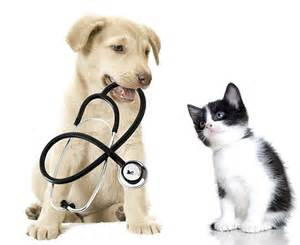 Dog and Cat Vet Clinic