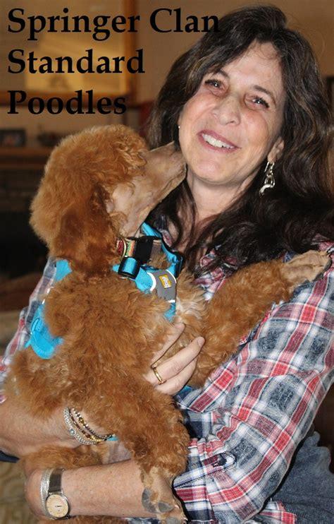 springer clan standard poodles