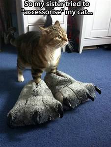 um i need a pedicure lolcats lol cat memes