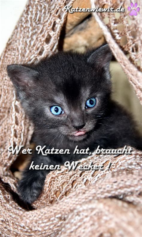 katzen spruch wer katzen hat braucht keinen wecker