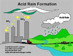 Effect Of Acid Rain