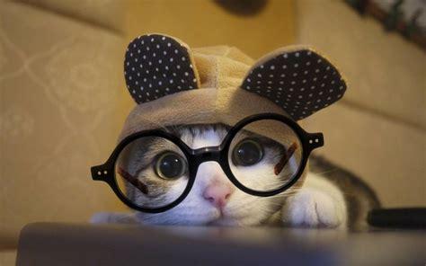 cute cat wear ozealglasses eyewear eyeglasses http