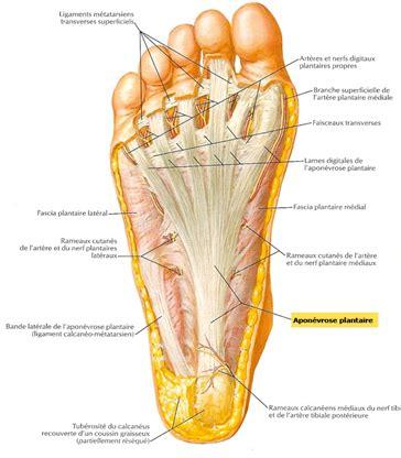 douleur exterieur du pied droit apon 233 vrosite plantaire shiatsu th 233 rapeutique